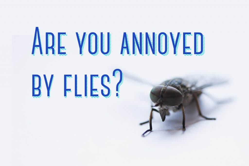 Are you annoyed by flies?